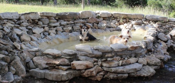 Build a Dog Pool Out of Rock.